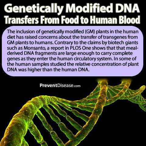critique on genetically modifying humans essay Read this free social issues research paper and other term papers, research papers and book reports journal review for genetic modification and genetic determinism.